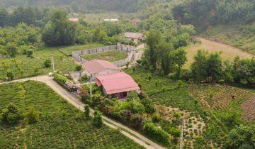 باغ چای تنکابن