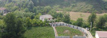 باغ چای با چشم انداز کوه